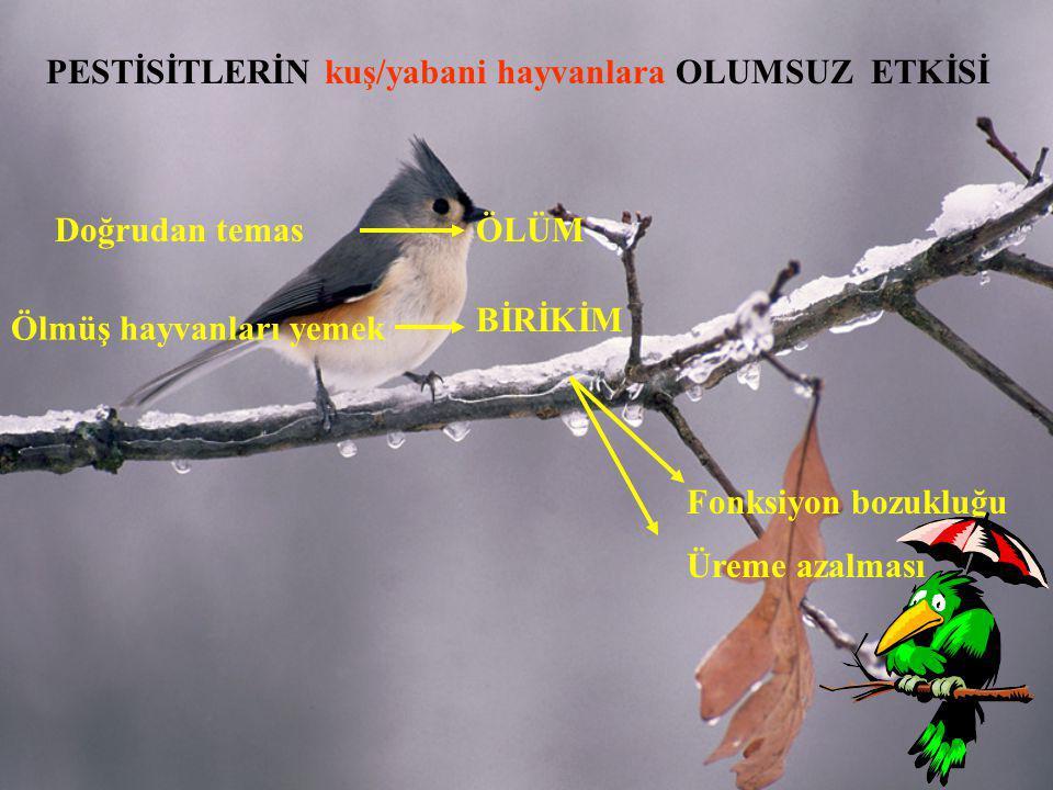 PESTİSİTLERİN kuş/yabani hayvanlara OLUMSUZ ETKİSİ