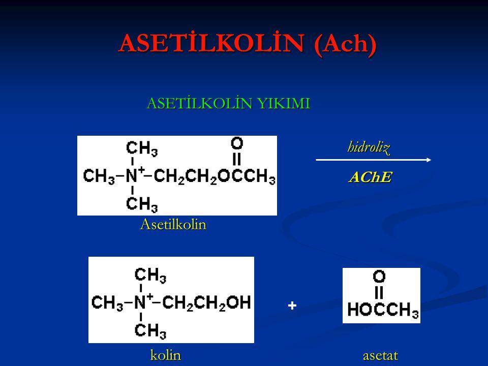 ASETİLKOLİN (Ach) ASETİLKOLİN YIKIMI Asetilkolin kolin asetat hidroliz