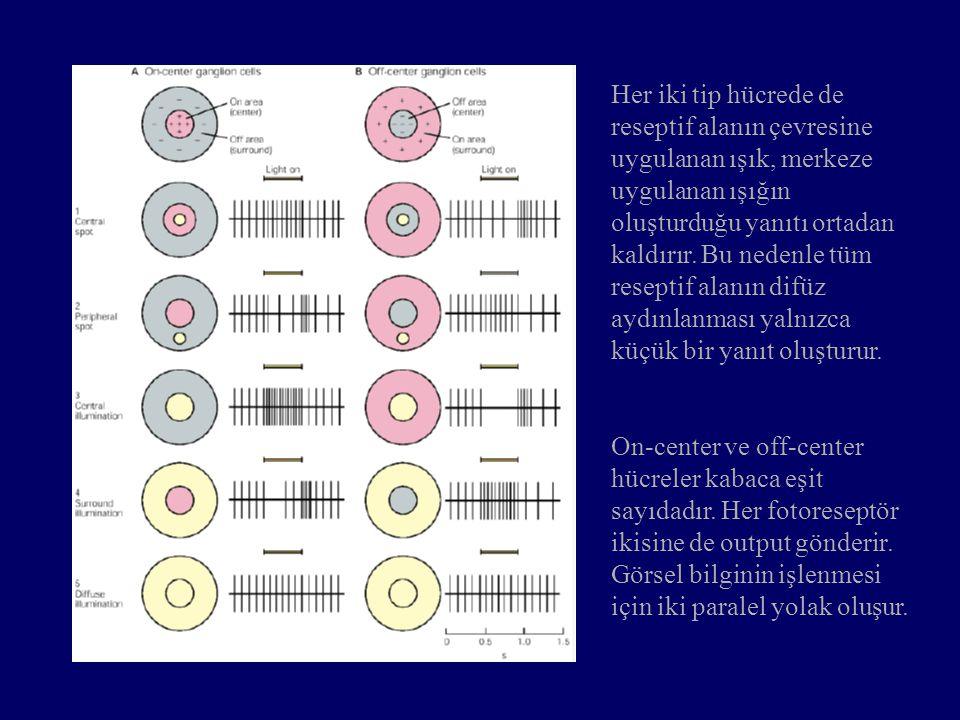 Her iki tip hücrede de reseptif alanın çevresine uygulanan ışık, merkeze uygulanan ışığın oluşturduğu yanıtı ortadan kaldırır. Bu nedenle tüm reseptif alanın difüz aydınlanması yalnızca küçük bir yanıt oluşturur.