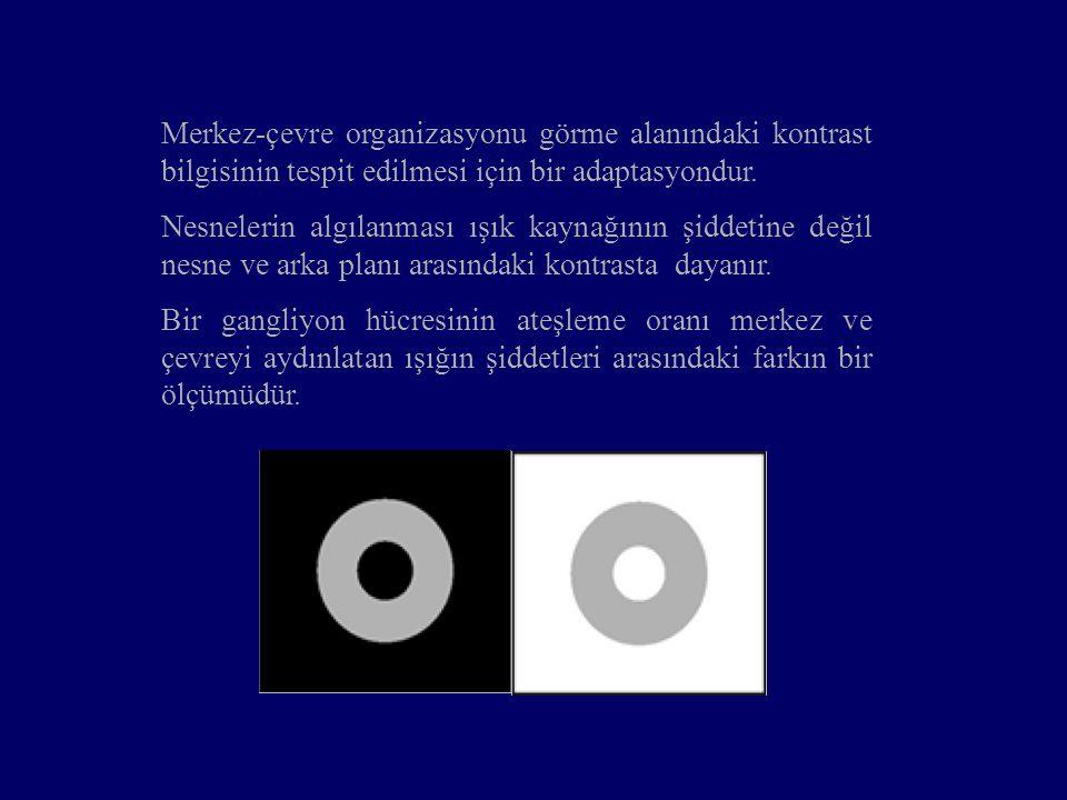Merkez-çevre organizasyonu görme alanındaki kontrast bilgisinin tespit edilmesi için bir adaptasyondur.