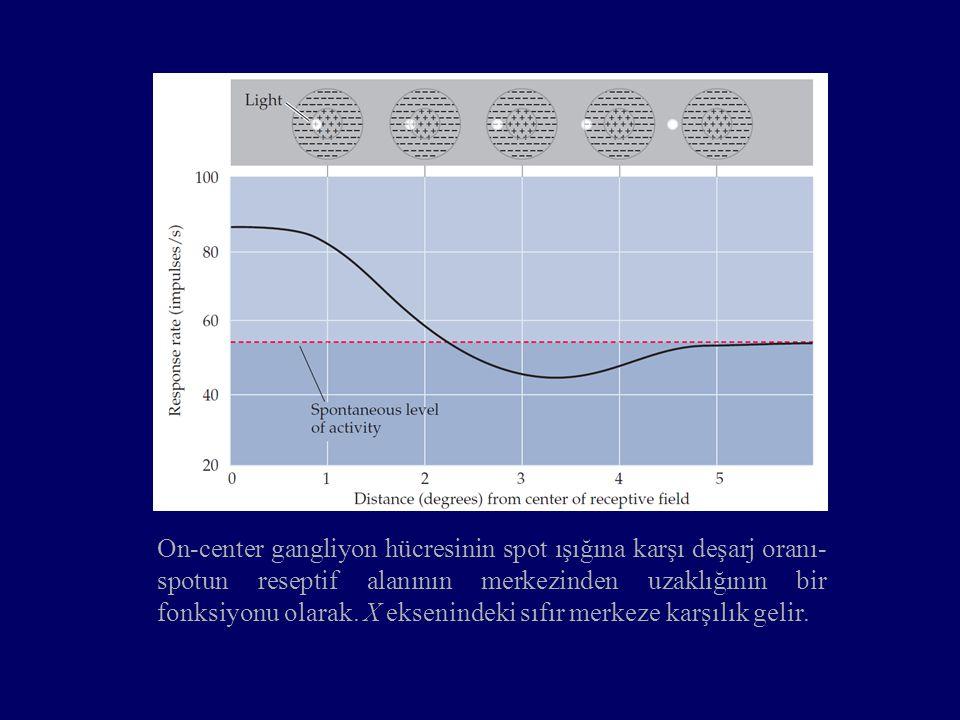 On-center gangliyon hücresinin spot ışığına karşı deşarj oranı-spotun reseptif alanının merkezinden uzaklığının bir fonksiyonu olarak.