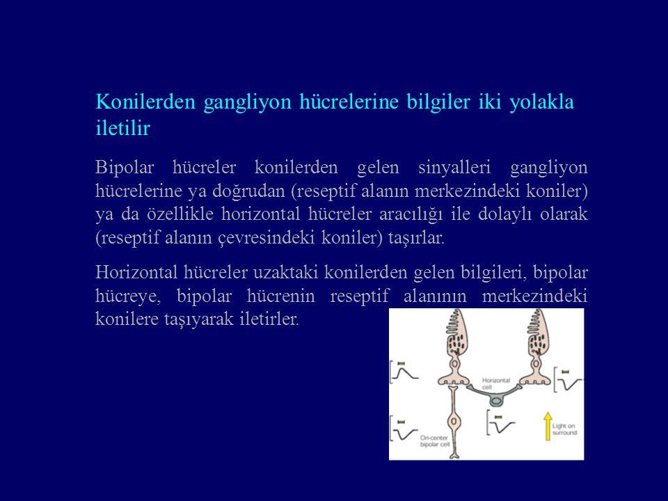 Konilerden gangliyon hücrelerine bilgiler iki yolakla iletilir