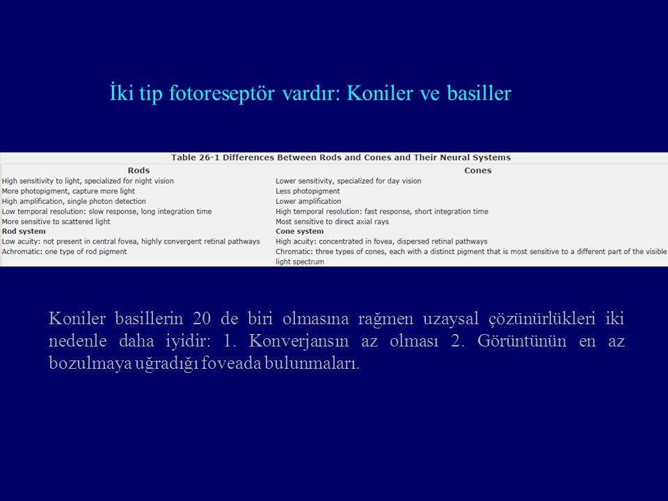 İki tip fotoreseptör vardır: Koniler ve basiller