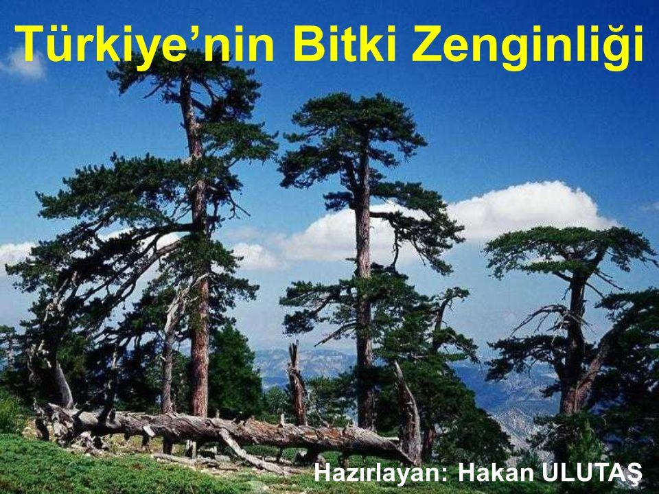 Türkiye'nin Bitki Zenginliği