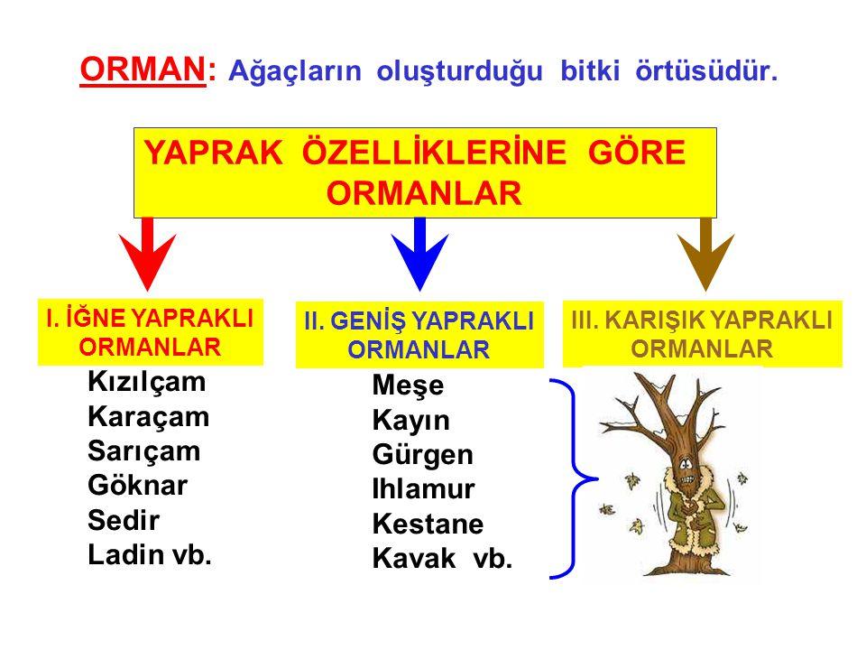 ORMAN: Ağaçların oluşturduğu bitki örtüsüdür.