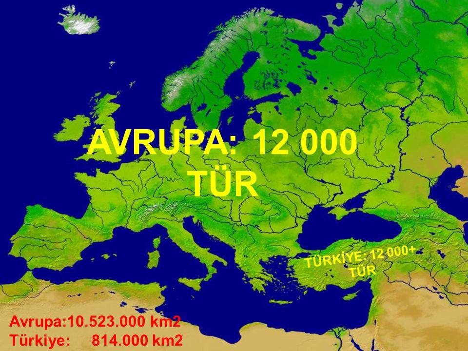 AVRUPA: 12 000 TÜR Avrupa:10.523.000 km2 Türkiye: 814.000 km2