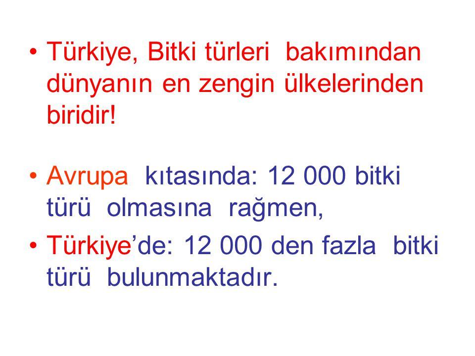 Türkiye, Bitki türleri bakımından dünyanın en zengin ülkelerinden biridir!