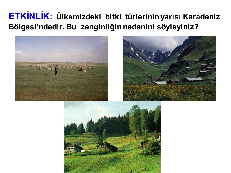 ETKİNLİK: Ülkemizdeki bitki türlerinin yarısı Karadeniz Bölgesi'ndedir