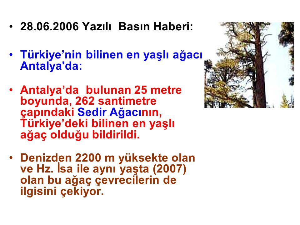 28.06.2006 Yazılı Basın Haberi: Türkiye'nin bilinen en yaşlı ağacı Antalya da: