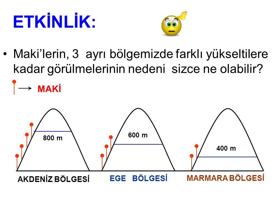 ETKİNLİK: Maki'lerin, 3 ayrı bölgemizde farklı yükseltilere kadar görülmelerinin nedeni sizce ne olabilir