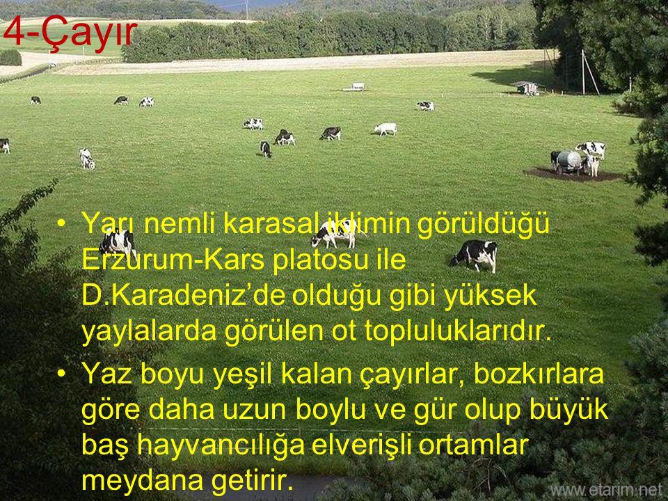 4-Çayır Yarı nemli karasal iklimin görüldüğü Erzurum-Kars platosu ile D.Karadeniz'de olduğu gibi yüksek yaylalarda görülen ot topluluklarıdır.