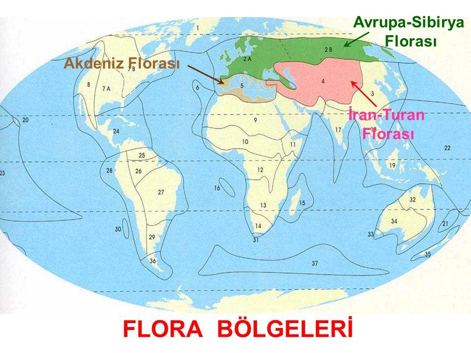 FLORA BÖLGELERİ Avrupa-Sibirya Florası Akdeniz Florası İran-Turan