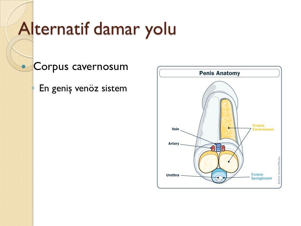 Alternatif damar yolu Corpus cavernosum En geniş venöz sistem