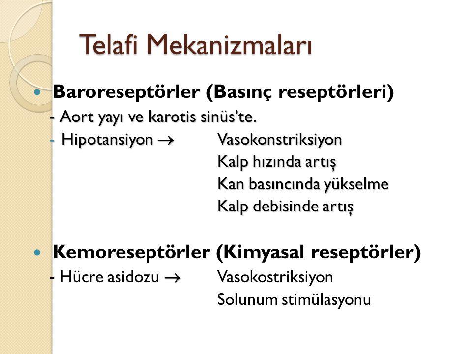Telafi Mekanizmaları Baroreseptörler (Basınç reseptörleri)