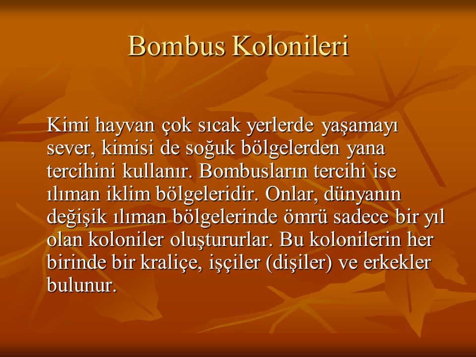 Bombus Kolonileri