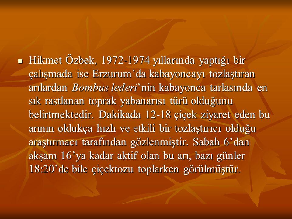 Hikmet Özbek, 1972-1974 yıllarında yaptığı bir çalışmada ise Erzurum'da kabayoncayı tozlaştıran arılardan Bombus lederi'nin kabayonca tarlasında en sık rastlanan toprak yabanarısı türü olduğunu belirtmektedir.