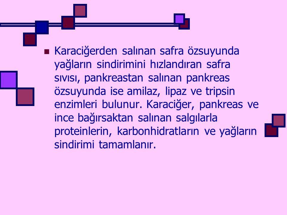 Karaciğerden salınan safra özsuyunda yağların sindirimini hızlandıran safra sıvısı, pankreastan salınan pankreas özsuyunda ise amilaz, lipaz ve tripsin enzimleri bulunur.