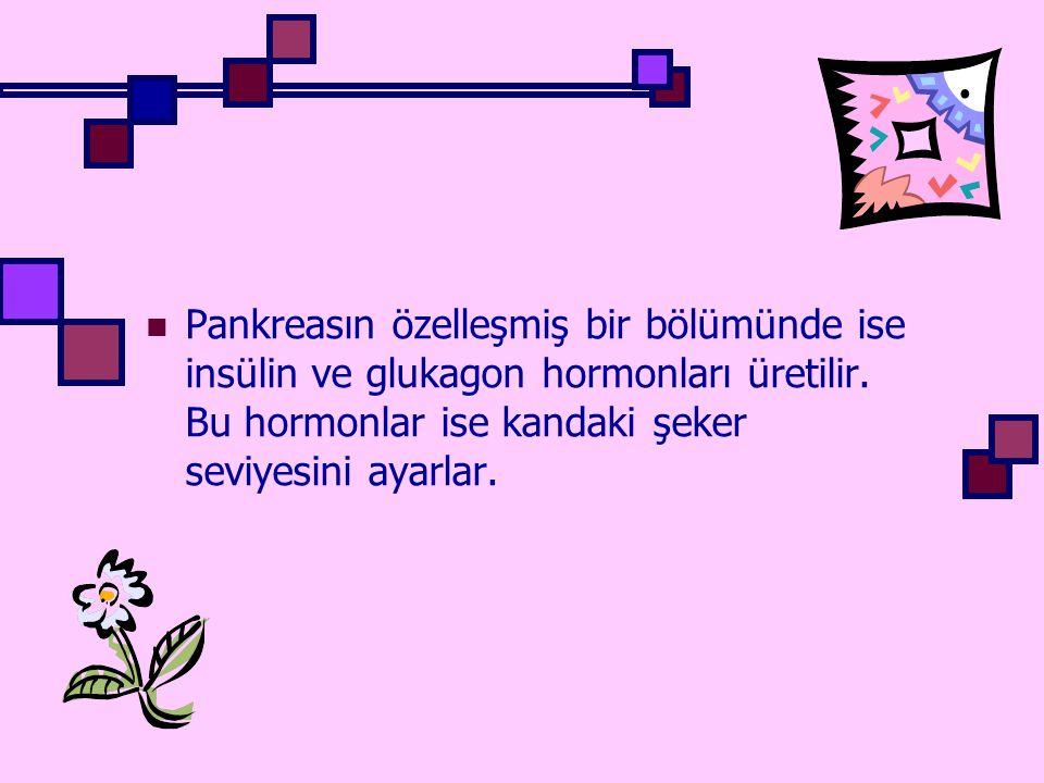 Pankreasın özelleşmiş bir bölümünde ise insülin ve glukagon hormonları üretilir.