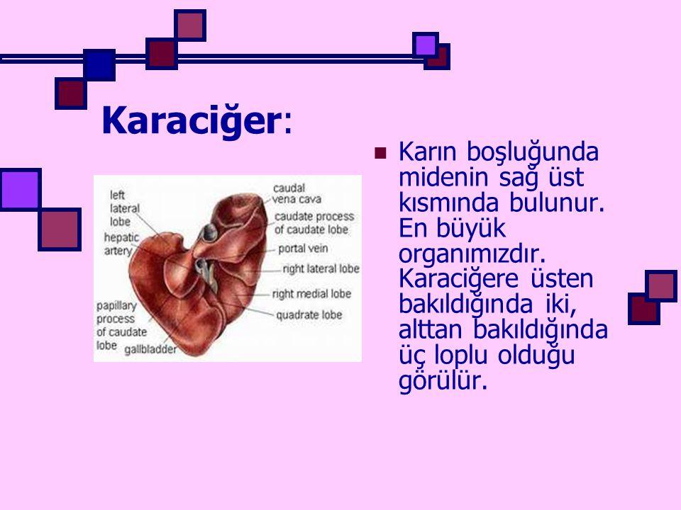 Karaciğer: