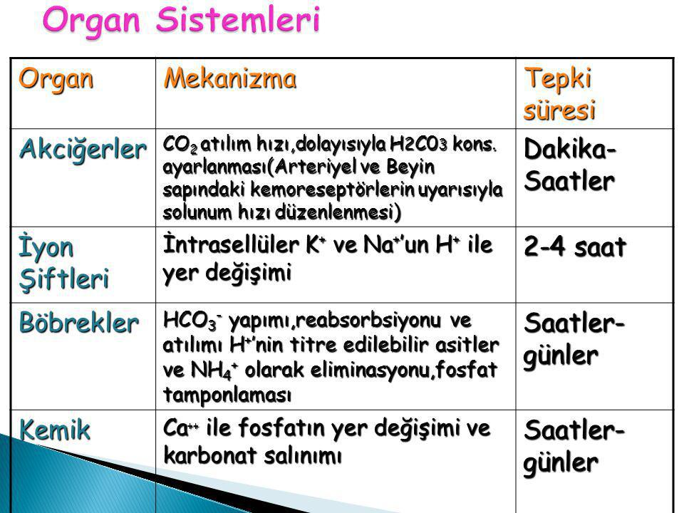 Organ Sistemleri Organ Mekanizma Tepki süresi Akciğerler
