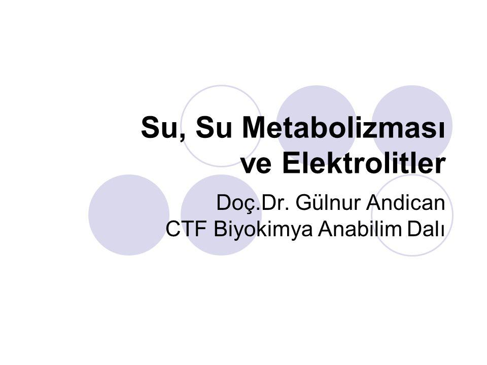 Su, Su Metabolizması ve Elektrolitler