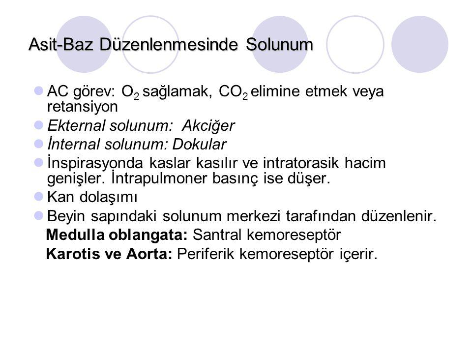 Asit-Baz Düzenlenmesinde Solunum