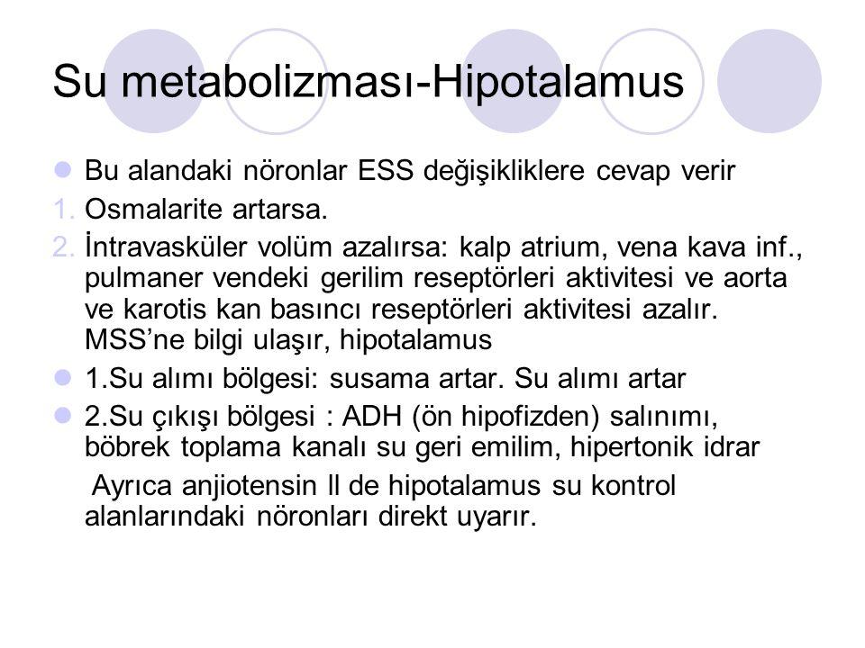Su metabolizması-Hipotalamus