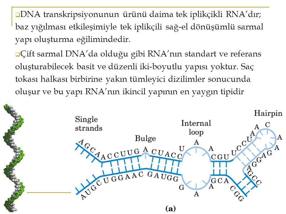 DNA transkripsiyonunun ürünü daima tek iplikçikli RNA'dır; baz yığılması etkileşimiyle tek iplikçili sağ-el dönüşümlü sarmal yapı oluşturma eğilimindedir.
