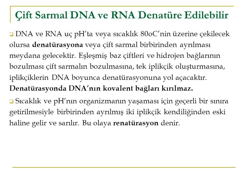 Çift Sarmal DNA ve RNA Denatüre Edilebilir