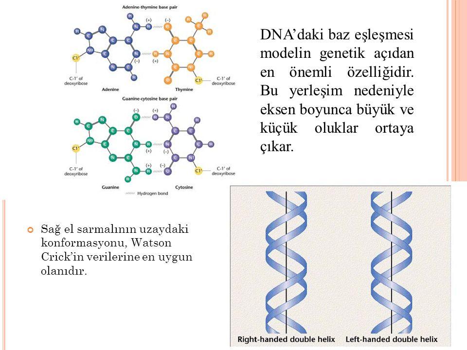 DNA'daki baz eşleşmesi modelin genetik açıdan en önemli özelliğidir