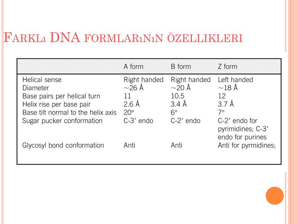 Farklı DNA formlarının özellikleri