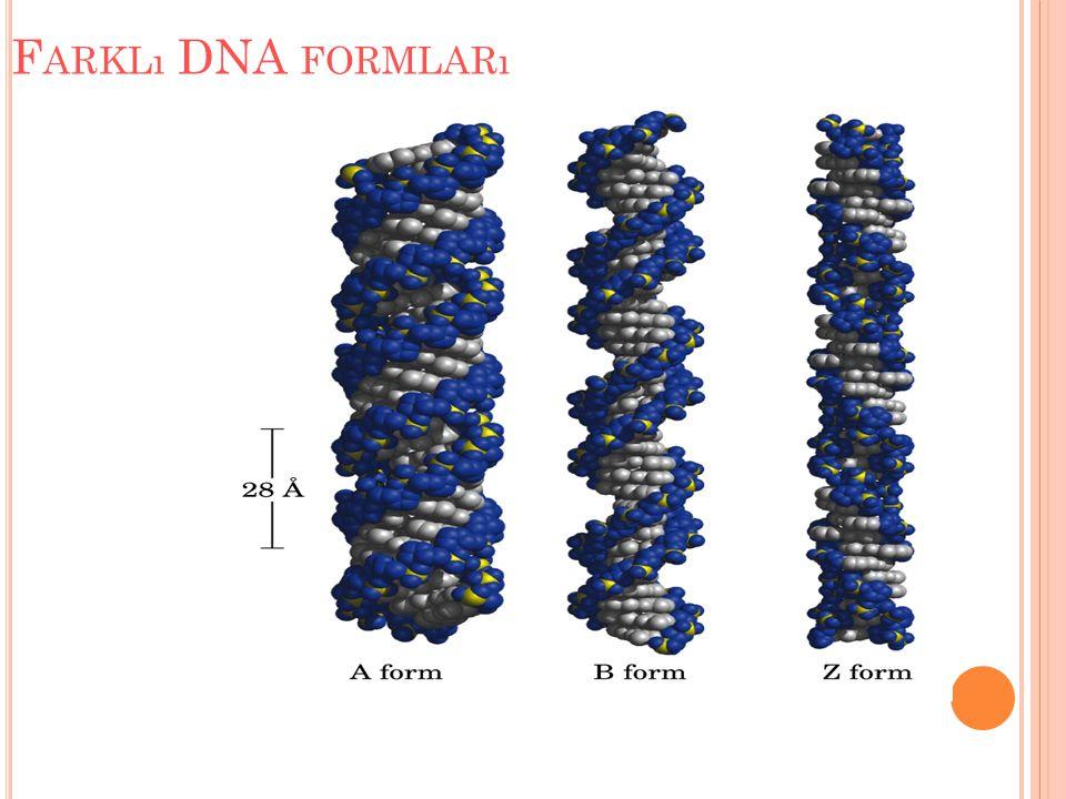 Farklı DNA formları