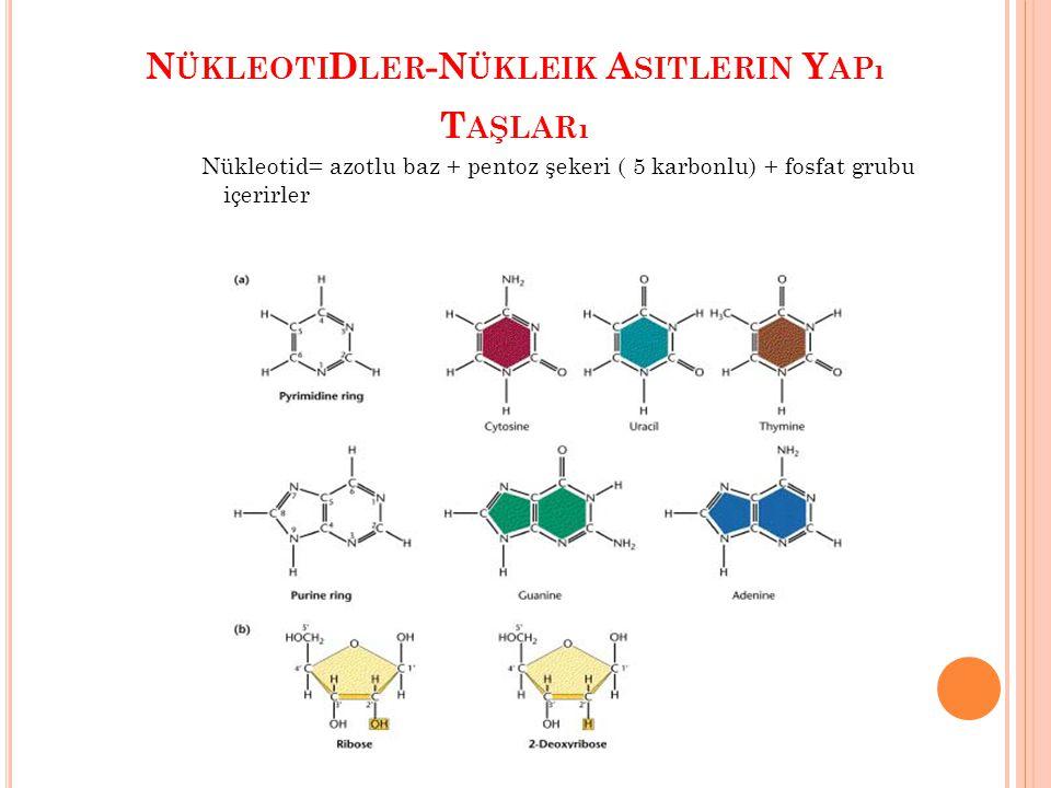 NükleotiDler-Nükleik Asitlerin Yapı Taşları