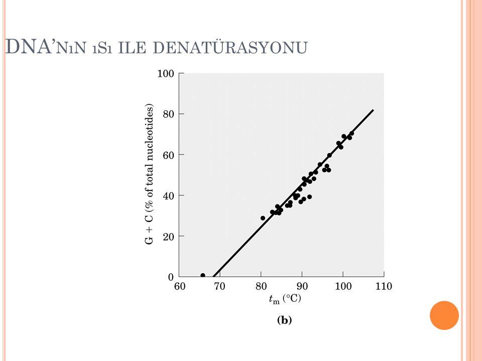 DNA'nın ısı ile denatürasyonu