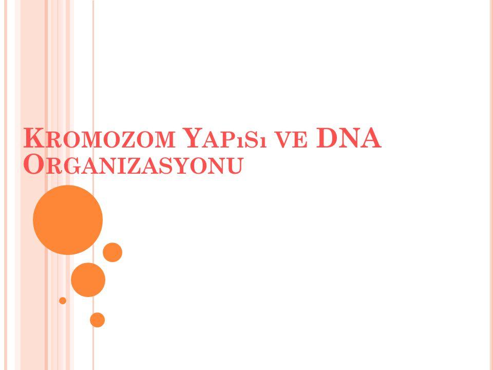 Kromozom Yapısı ve DNA Organizasyonu