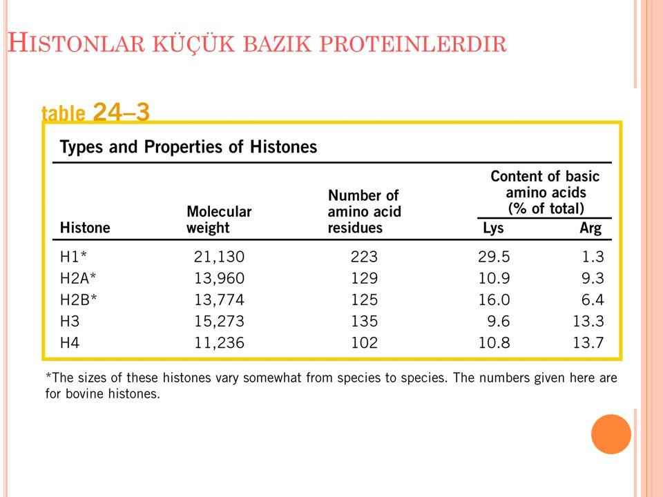 Histonlar küçük bazik proteinlerdir