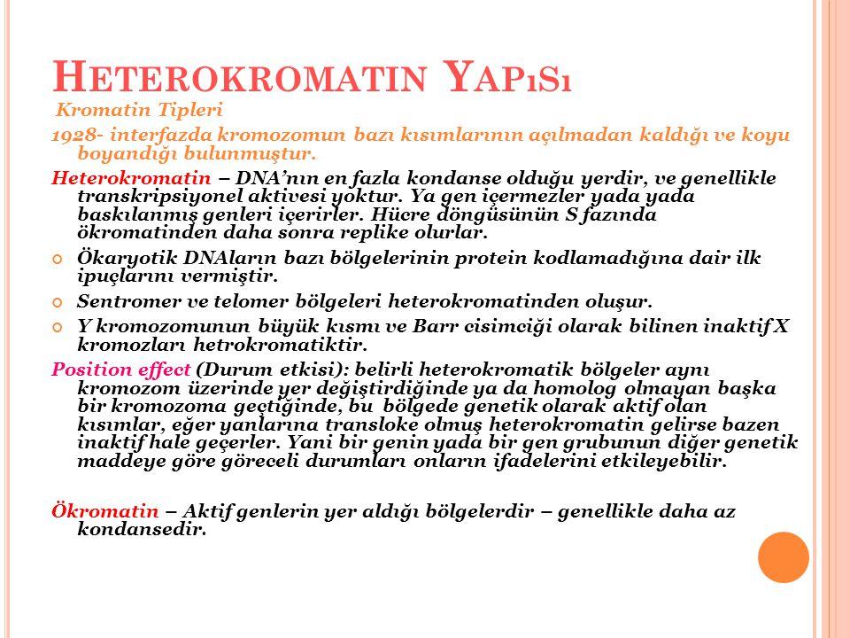 Heterokromatin Yapısı