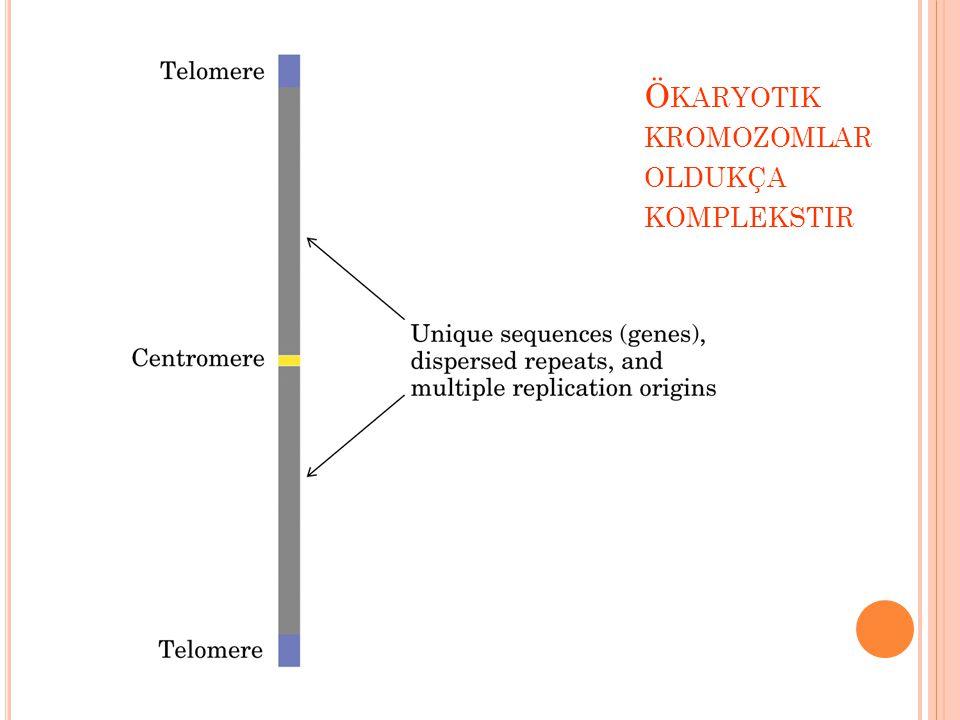 Ökaryotik kromozomlar oldukça komplekstir