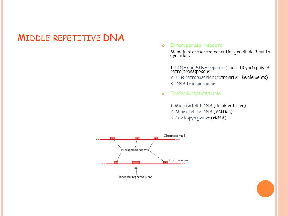 Middle repetitive DNA İnterspersed repeats