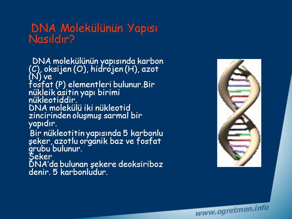 DNA Molekülünün Yapısı Nasıldır