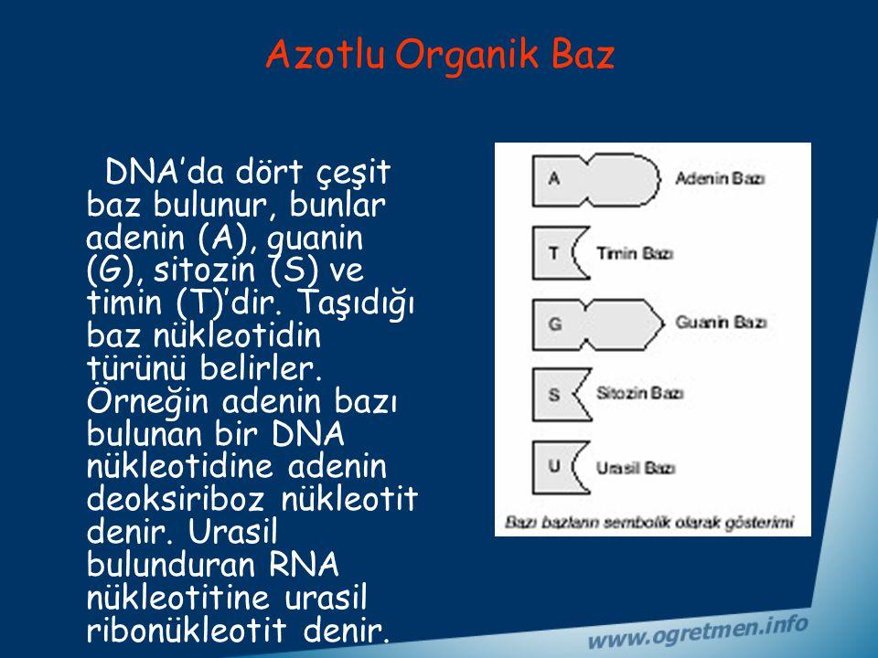 Azotlu Organik Baz