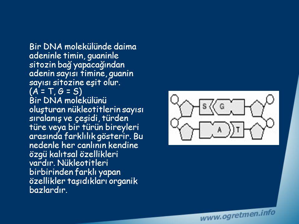 Bir DNA molekülünde daima adeninle timin, guaninle sitozin bağ yapacağından adenin sayısı timine, guanin sayısı sitozine eşit olur.