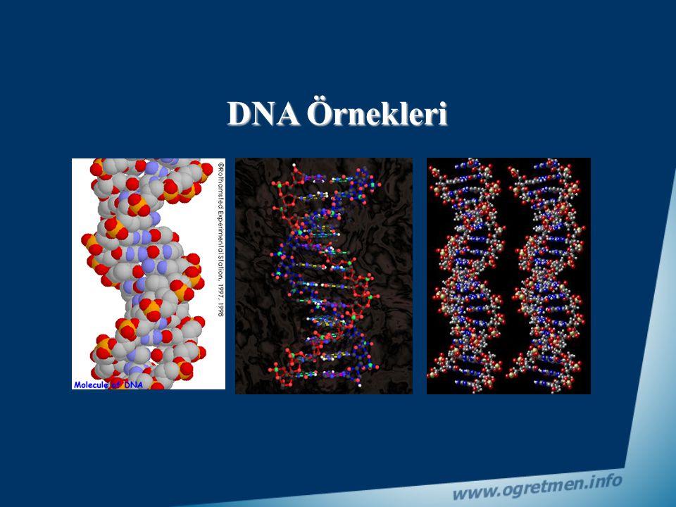 DNA Örnekleri