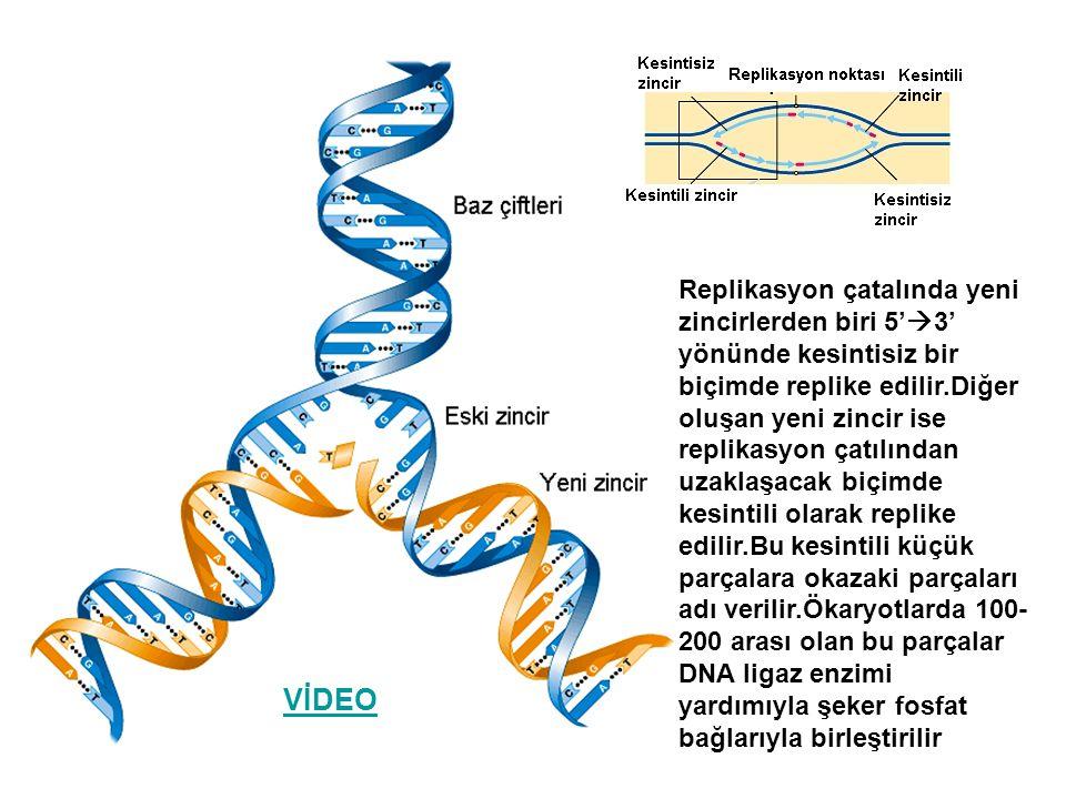 Replikasyon çatalında yeni zincirlerden biri 5'3' yönünde kesintisiz bir biçimde replike edilir.Diğer oluşan yeni zincir ise replikasyon çatılından uzaklaşacak biçimde kesintili olarak replike edilir.Bu kesintili küçük parçalara okazaki parçaları adı verilir.Ökaryotlarda 100-200 arası olan bu parçalar DNA ligaz enzimi yardımıyla şeker fosfat bağlarıyla birleştirilir