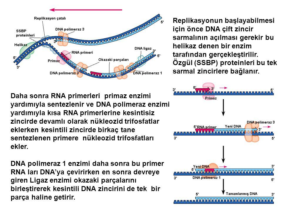 Replikasyonun başlayabilmesi için önce DNA çift zincir sarmalının açılması gerekir bu helikaz denen bir enzim tarafından gerçekleştirilir. Özgül (SSBP) proteinleri bu tek sarmal zincirlere bağlanır.