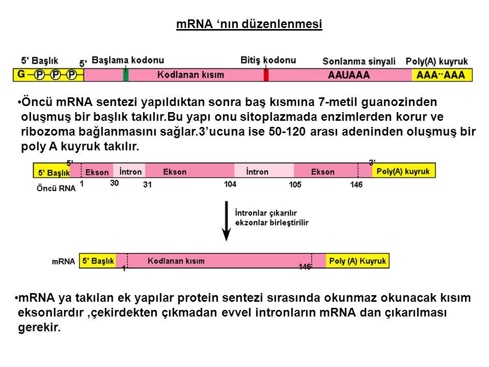 mRNA 'nın düzenlenmesi