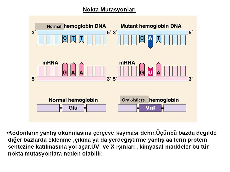 Nokta Mutasyonları Kodonların yanlış okunmasına çerçeve kayması denir.Üçüncü bazda değilde.