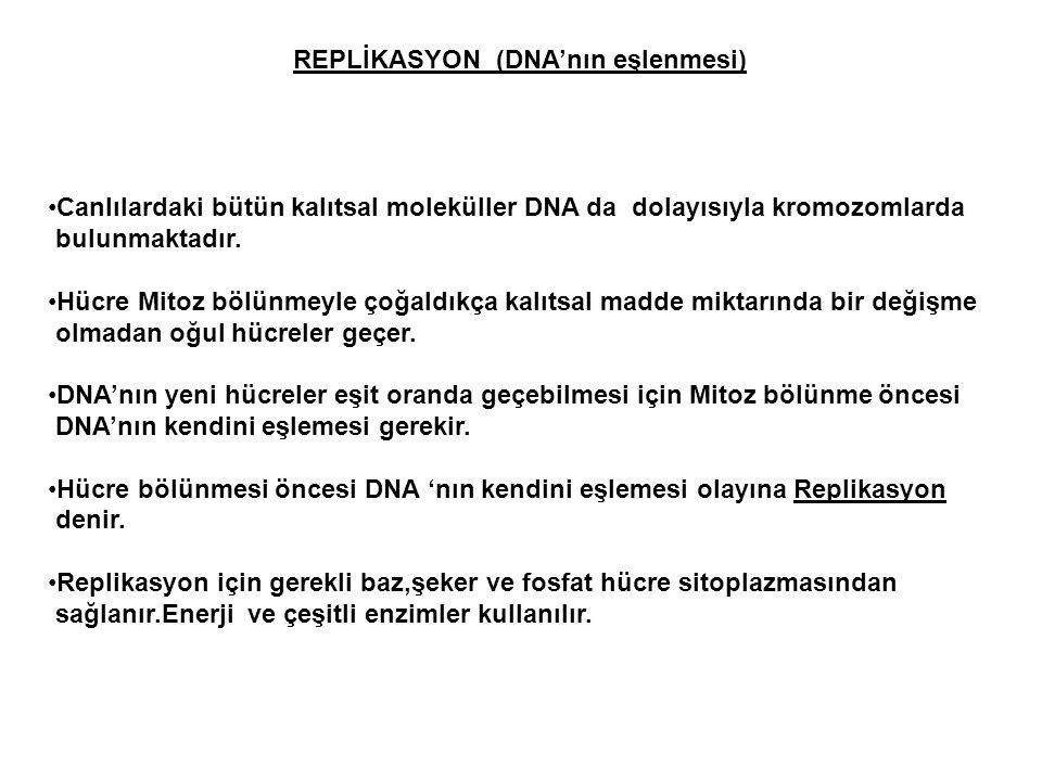 REPLİKASYON (DNA'nın eşlenmesi)