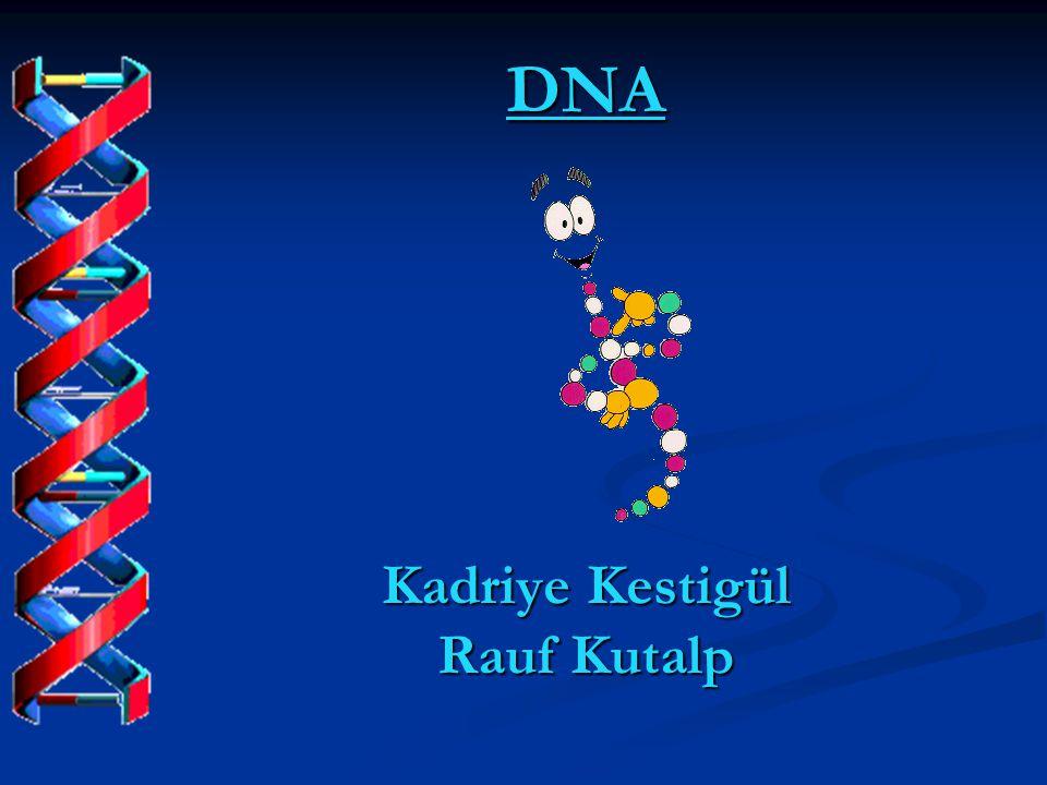 DNA Kadriye Kestigül Rauf Kutalp
