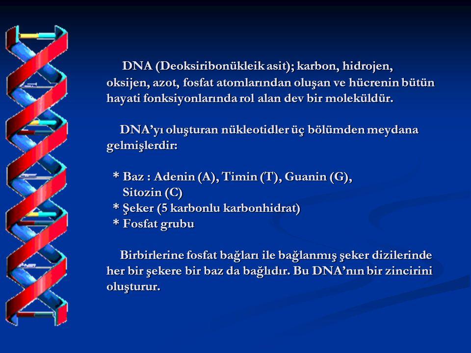 DNA (Deoksiribonükleik asit); karbon, hidrojen, oksijen, azot, fosfat atomlarından oluşan ve hücrenin bütün hayati fonksiyonlarında rol alan dev bir moleküldür.